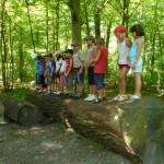 Kletterpartie auf Baumstamm