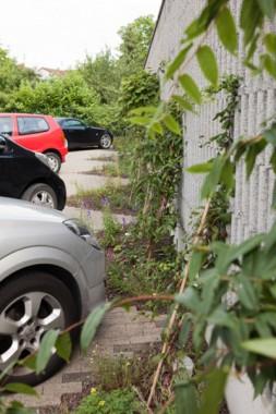 Parkplatz nachher (Foto: N. Macekas)