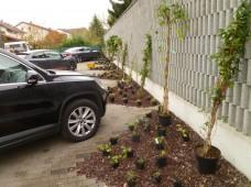 Der Parkplatz mit Pflanzinseln